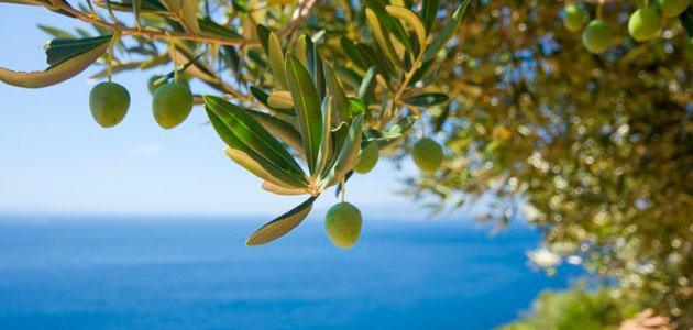 Un método más eficiente para detectar en el aire la principal sustancia del olivo causante de alergias