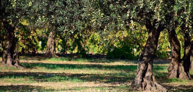 El COI acoge un seminario internacional sobre el cultivo del olivo y el cambio climático