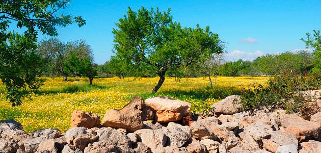 La CE prevé récord de exportaciones europeas de aceite de oliva esta campaña