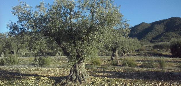 Andalucía convocará a comienzos de 2021 ayudas ambientales por valor de 147,5 millones de euros