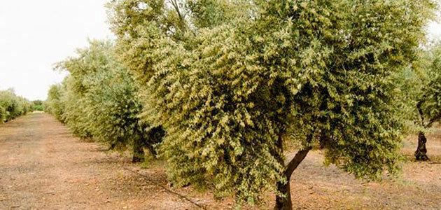 Cómo planificar futuras plantaciones bajo un contexto de cambio climático en España