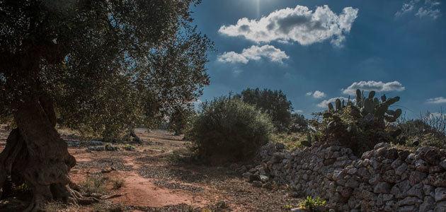 La CE prevé que la producción de aceite de oliva descienda en España la próxima campaña y aumente en Italia, Grecia y Portugal