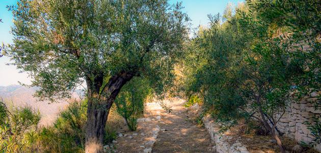 ¿Cómo afectará el calentamiento global a la disponibilidad de agua en las zonas mediterráneas?