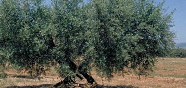 Cataluña lidera un proyecto transfronterizo para apoyar producciones de calidad como el AOVE