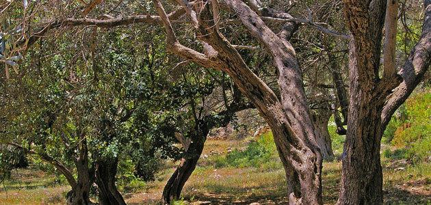 Las exportaciones de aceite de oliva en el primer mes de campaña alcanzan niveles máximos