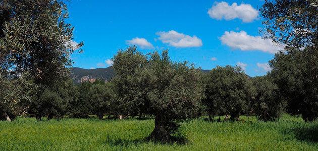 AEMO aprueba un documento que aboga por la rentabilidad del cultivo en España