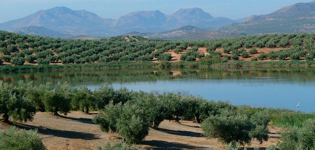 El COI prevé que la producción mundial de aceite de oliva aumente un 12% en la campaña 2017/18