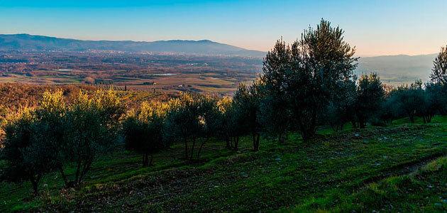 La producción europea de aceite de oliva se sitúa en 1,7 millones de toneladas hasta enero