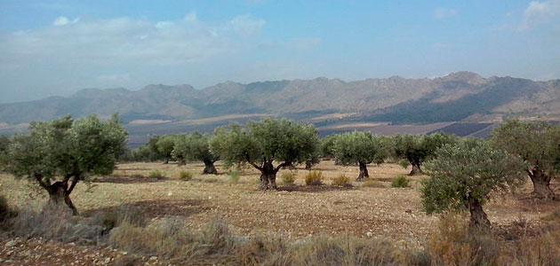La Fundación Savia pide que la PAC consolide el modelo de producción ecológica