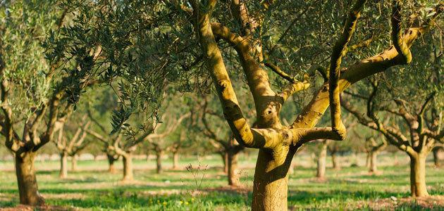 Nuevas ayudas que facilitarán la financiación a titulares de explotaciones agrarias afectadas por la sequía