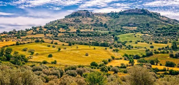 El olivo supone el 25% del cultivo permanente del planeta