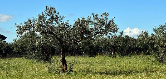 Bruselas prevé un stock final de campaña de 314.600 t. de aceite de oliva en la UE