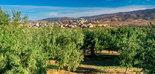 España producirá el 75% del aceite de oliva de la UE, según Cooperativas