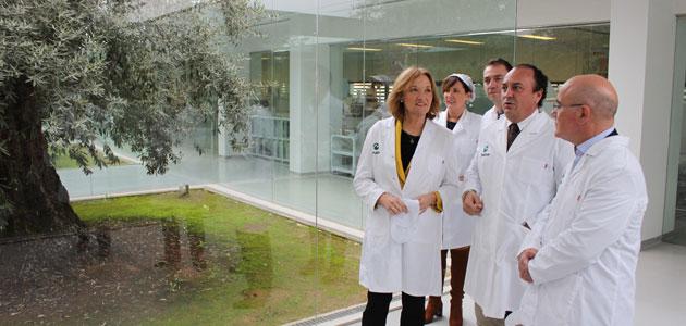 Andalucía invierte 29,7 millones de euros en ayudas para apoyar el olivar ecológico