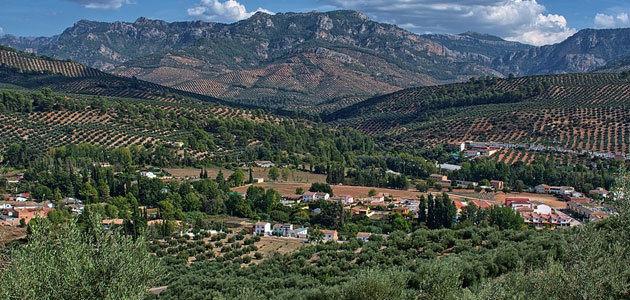 El sector agrario andaluz vigilará al detalle el desarrollo del acuerdo político de la PAC y su redacción final