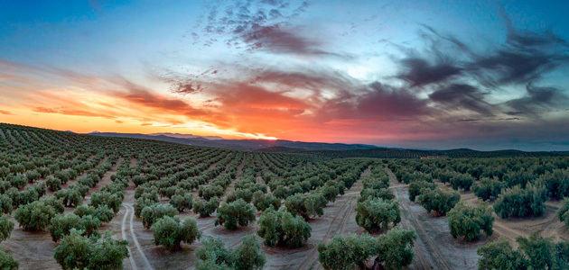 Nuevos pasos en la candidatura del Paisaje Cultural del Olivar en Andalucía como Patrimonio Mundial
