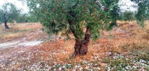 Las tormentas de pedrisco, el riesgo meteorológico más dañino para la agricultura española durante 2020