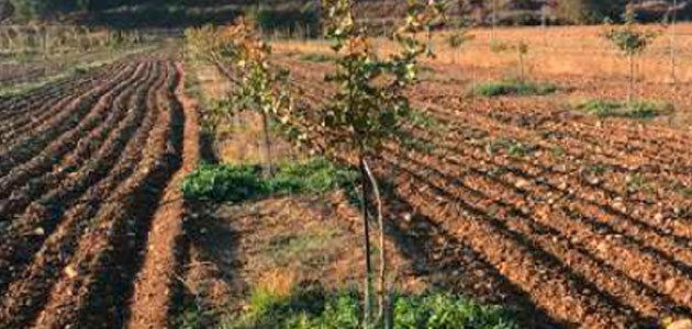 La Diputación de Jaén concede en 2019 más de 400.000 euros para apoyar la actividad agraria alternativa al olivar