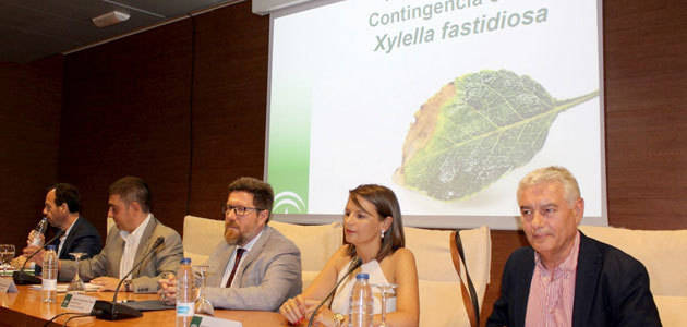 Andalucía activa el teléfono de consulta contra la Xylella fastidiosa y refuerza sus centros de investigación de referencia
