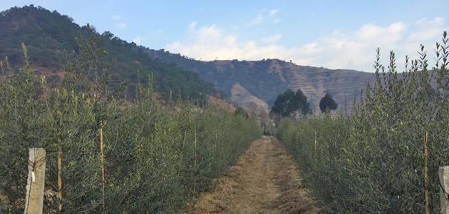 La UPM acoge una jornada sobre el olivar en China