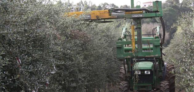 El Cicytex evalúa diferentes estrategias de riego controlado en olivar en seto