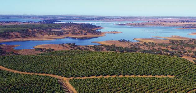 La producción de aceite de oliva en Portugal desciende un 30% esta campaña