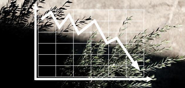 Máxima incertidumbre en los mercados oleícolas: las lluvias tienen la clave
