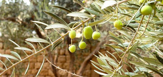 El precio del aceite de oliva encadena 23 meses de bajadas con un descenso acumulado de 1,56 euros/kg.