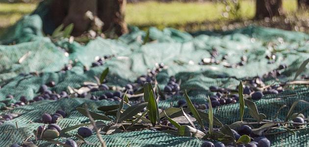 El MAPA y las CCAA siguen de cerca la situación de los precios del aceite de oliva para adoptar las medidas necesarias