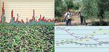 Inteligencia artificial para predecir el precio del aceite de oliva