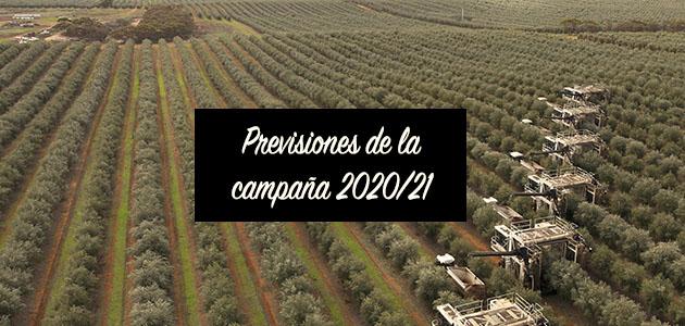 Previsiones: ¿Cuál será la producción de la próxima campaña oleícola?