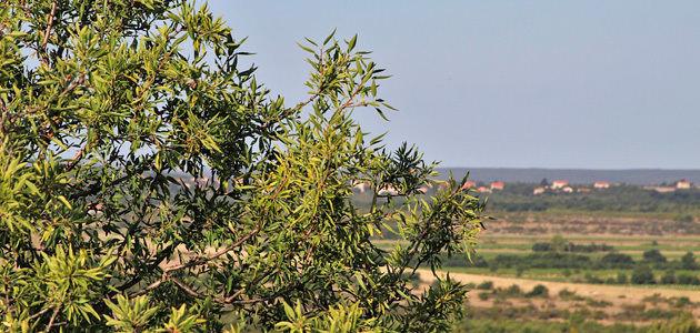 La producción europea de aceite de oliva se sitúa en 1,96 millones de toneladas hasta febrero