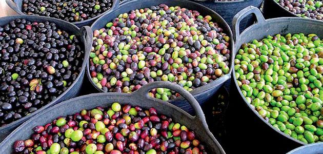 La comercialización de aceite de oliva cae un 14%