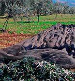 Campaña de olivar 2015/16: demasiadas variables en juego
