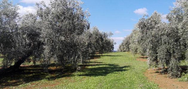 Andalucía activa un proyecto de gestión integrada de plagas en cultivos como el olivar