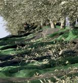 La producción de aceite de oliva asciende a 1.747.800 t. en el primer semestre de campaña
