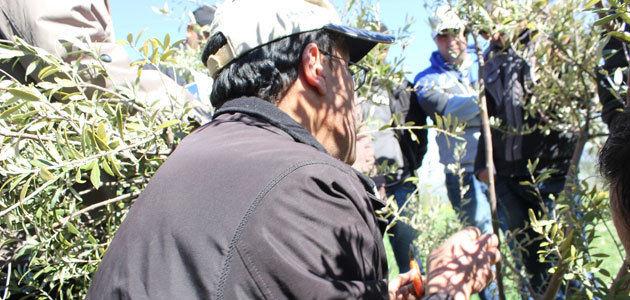 Descubrir el potencial del aceite de oliva tunecino a través de un proyecto para el desarrollo de la cadena de valor