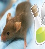 Un estudio demuestra en ratones el posible efecto terapéutico del AOVE en la Esclerosis Lateral Amiotrófica