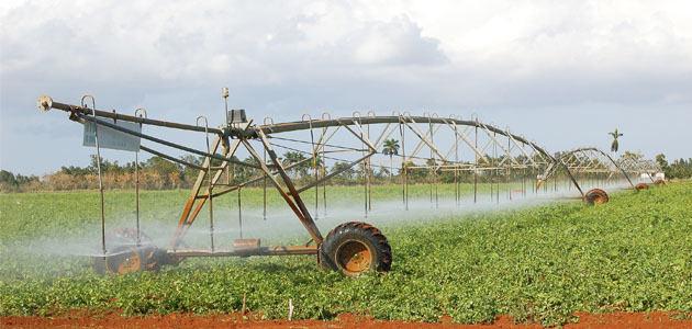 El volumen de agua utilizada para riego de olivar desciende un 11%