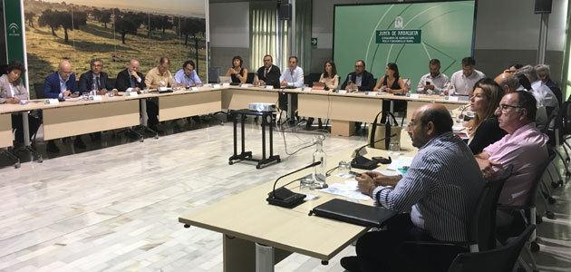 Andalucía prevé una producción de aceituna de mesa de 521.772 toneladas, casi un 12% más que la campaña anterior