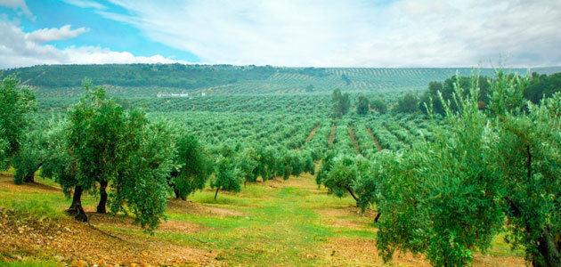Lanzan una aplicación móvil para controlar la cantidad óptima de fertilizantes y agua en el riego del olivar