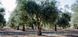 Los auditores europeos evalúan el impacto de la política agrícola en la utilización sostenible del agua
