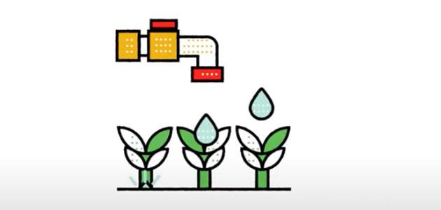Desarrollan un sistema de riego más eficiente para el olivar ecológico