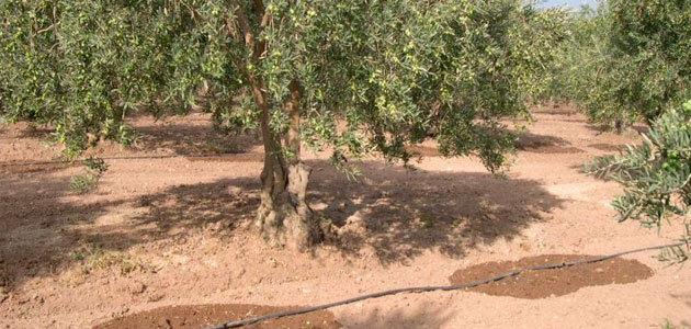 Proponen un método para la evaluación de la rentabilidad del riego en la agricultura