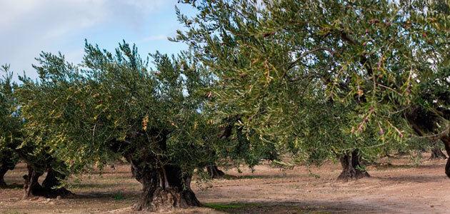 Una jornada abordará el momento idóneo de recolección de la variedad arróniz en Rioja Alavesa