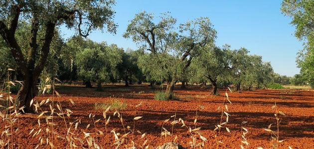 """""""Chalecos naranjas"""" en Italia para protestar por la situación del sector agrícola y olivarero"""