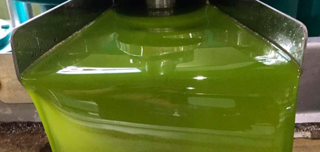 UPA-Andalucía destaca la buena salud de la comercialización de aceite de oliva
