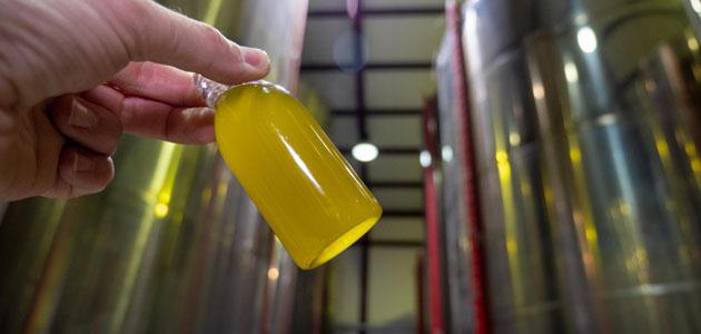 Buen ritmo de producción y salidas de aceite de oliva en noviembre