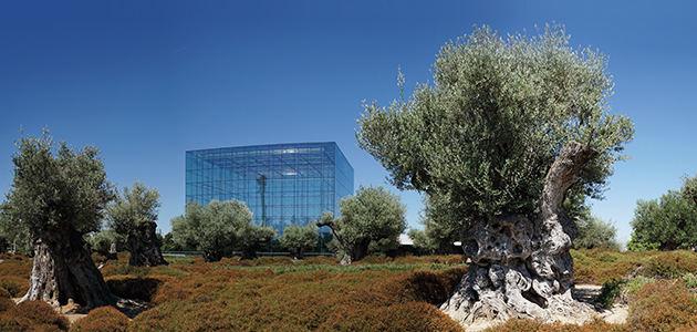 Banco Santander dona variedades de olivo no catalogadas para el Banco de Germoplasma de Córdoba