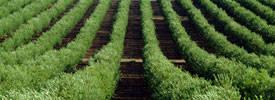 Importadores y exportadores de aceite de oliva y semillas